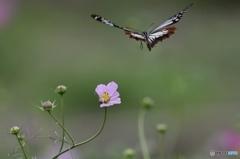 飛び立つ天使