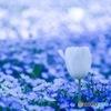 青い海に白い花