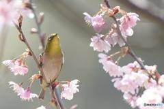 春の陽気に誘われて