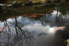 水のある風景 37 【池】