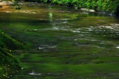 穏やかな渓流の流れ
