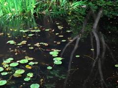 水のある風景 36 【水草】