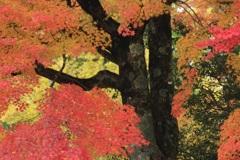 色づく 秋