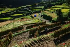 棚田の農作業風景