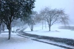 福岡の今年は これが最後の雪かな・・・?