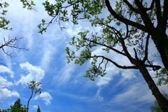 ・・青空となんじゃもんじゃノ木