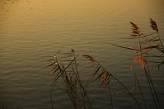 水のある風景 44