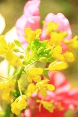春・ 喜びの詩