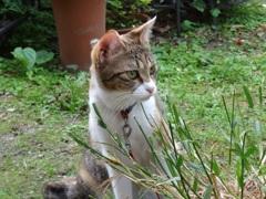 庭で遊ぶミーちゃん