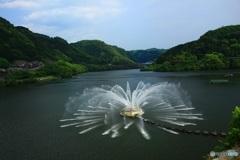 水面に咲く花