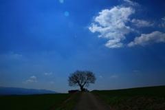 高原の一本桜
