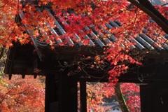 秋 深しころ・・・