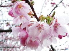 ときめきの春