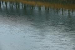 立木が並ぶ湖面