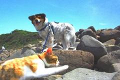 仲良く海辺を散策