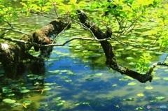 初夏の湖面