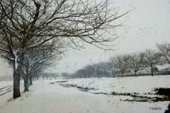 雪日の小川