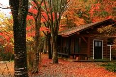 我が家------ 夢のまた夢