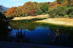ブルーに染まる池