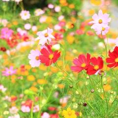 鮮やかに咲く・・・