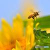 太陽と蜜蜂