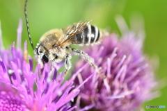 花粉症ではないね!