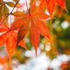 伊勢神宮の紅葉