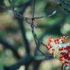 赤色と白色の花