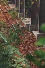 落葉の居場所