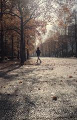秋を彷徨う