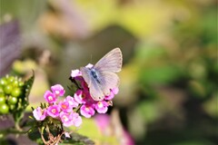 昨日の蝶 (1)