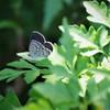 昨日の蝶 (2)