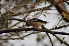 昨日の野鳥 (2)