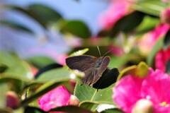 昨日の蝶 (3)