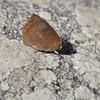 今日の蝶 (3)