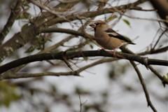 昨日の野鳥 (1)
