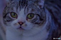 DSC06199-一伊豆の猫園の猫-2