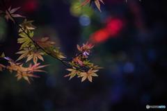 DSC01202.  秋に惜別の唄 秋の名残-3 jpg