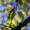 DSC00825 早くも葉桜