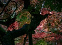 DSC02770 東漸寺の光彩