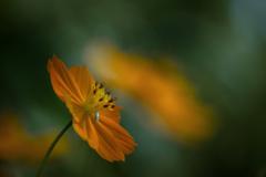 木漏れ日の中の 花と虫