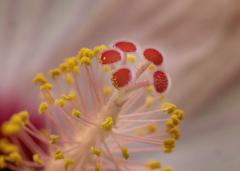 花粉でお化粧?