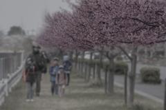 DSC04293 日曜の遊歩道