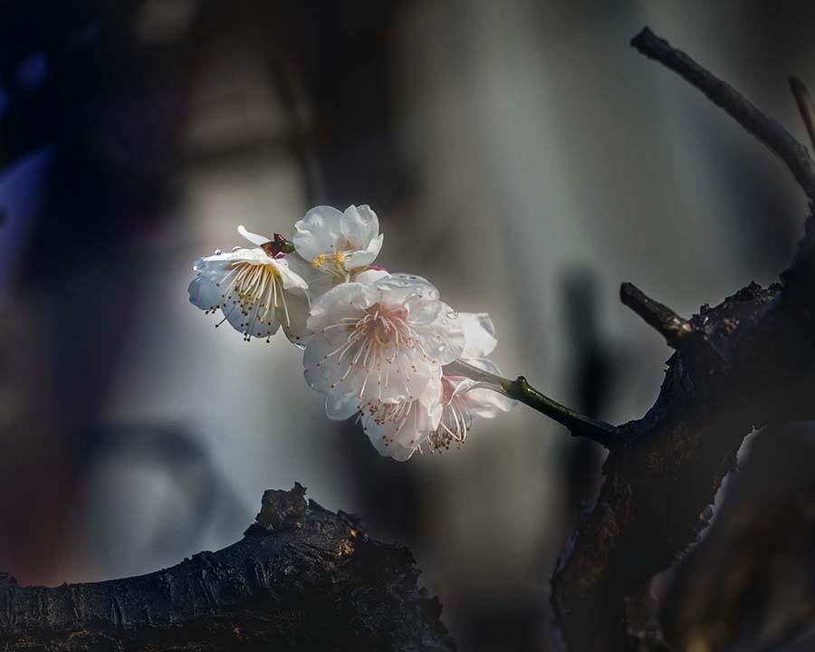 DSC00304 小枝は花盛り-2