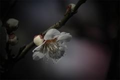 DSC03604 明日から弥生三月陽春の候