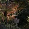 DSC06279.関口芭蕉園の紅葉