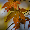 DSC09875 今年の秋を想う