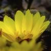 DSC01728  花壇表通りにて