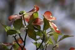 葉も主役で歓喜の舞