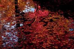 DSC06181 紅の池もよう